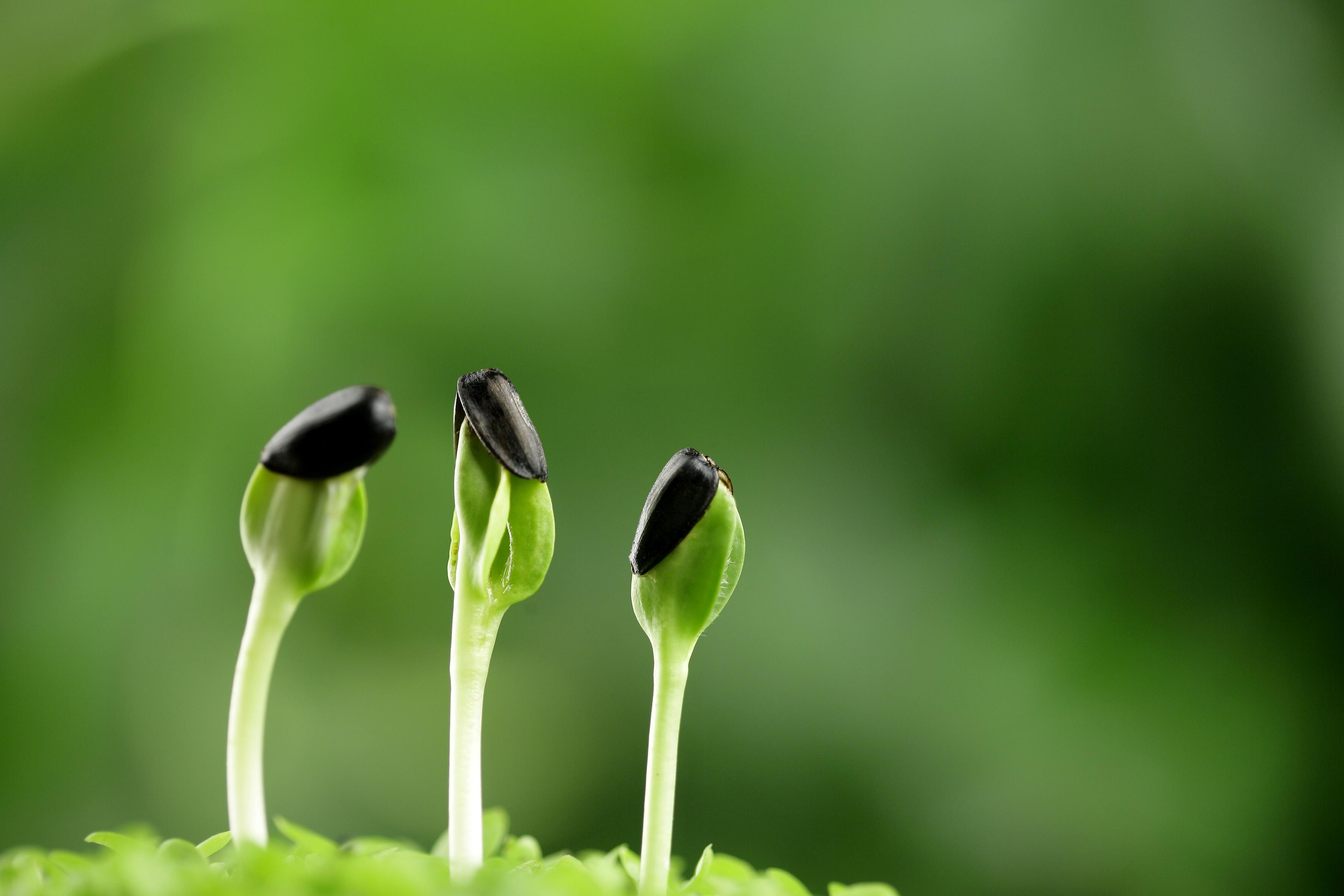 种子怎么用_纸巾催芽的方法-花百科