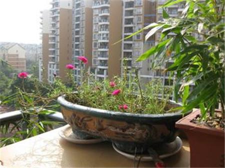 ... 花盆栽图片欣赏 下一条: 折纸花艺术欣赏:将美丽