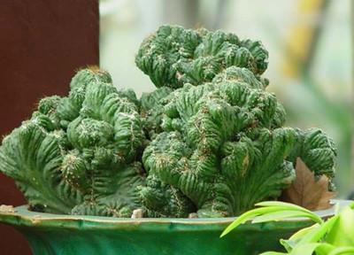 仙人掌类植物有哪些