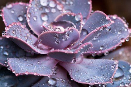 紫珍珠长虫子救治方法
