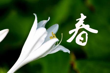玉簪花春季养护