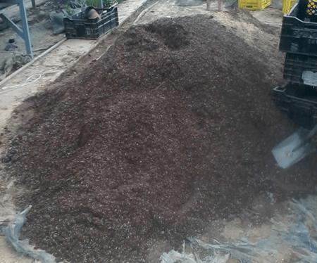 郁金香种植土