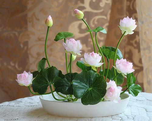 影响碗莲生长因素