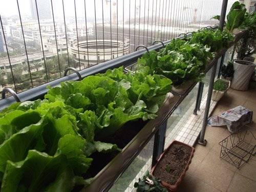 阳台种菜之施肥方法