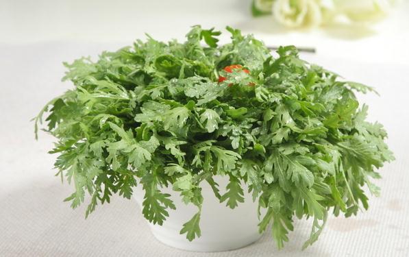 阳台种菜-茼蒿的养护