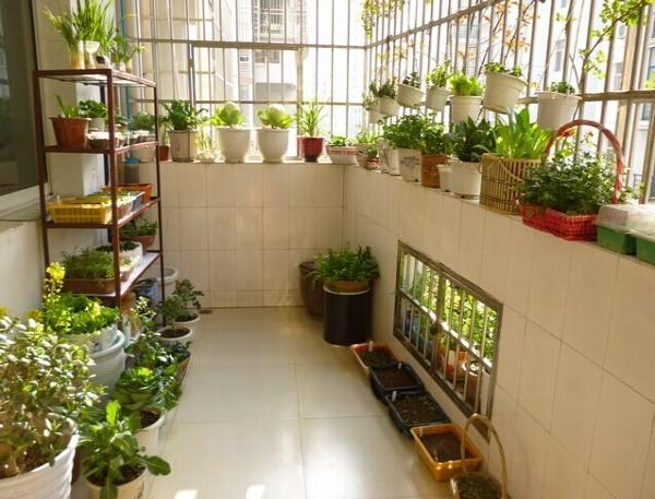 小菜园-阳台种菜