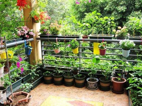 阳台种菜怎么施肥