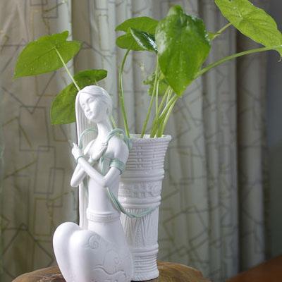 摆放在财位的植物适合水种(水培滴水观音)