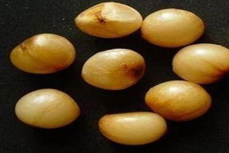 君子兰种子图片