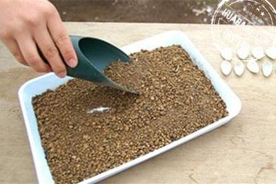 准备多肉植物叶片繁殖容器及培养土