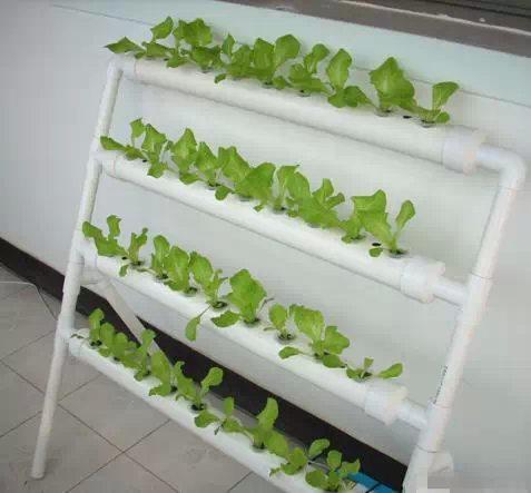 阳台PVC种菜成果图