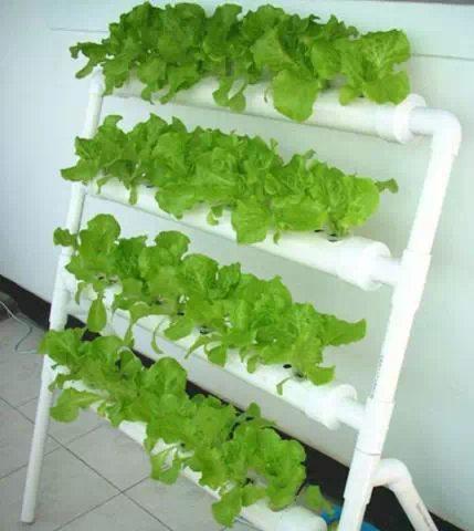 阳台种菜效果图