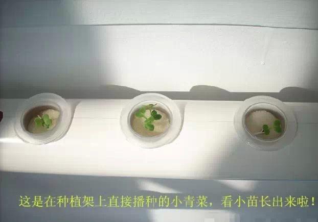 阳台种菜育苗过程