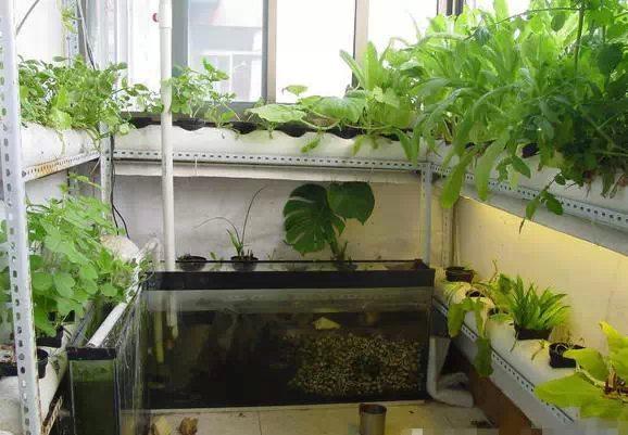 阳台PVC种菜-无土栽培