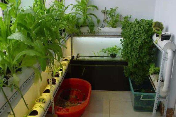 阳台种菜-PVC管