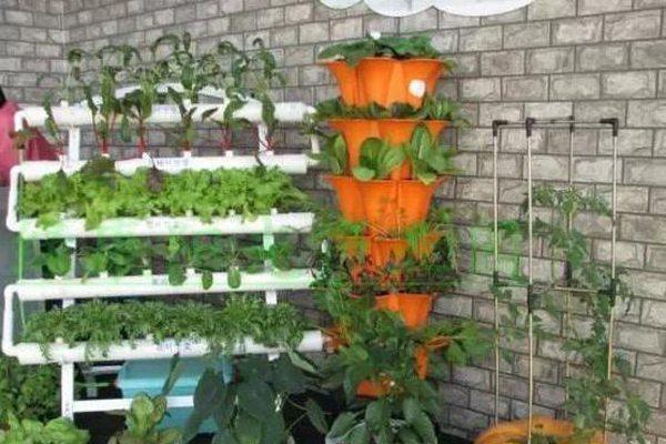 阳台种菜美图
