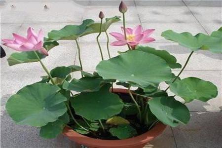 花盆中浸泡盆土的照片
