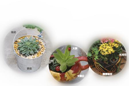 铁盆,卡通盆,藤柳套盆多肉植物