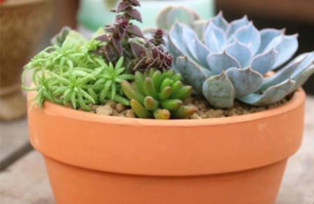 多肉植物陶盆