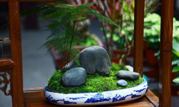 文竹点石铺苔