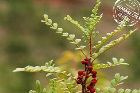 大自然的清香木图片欣赏