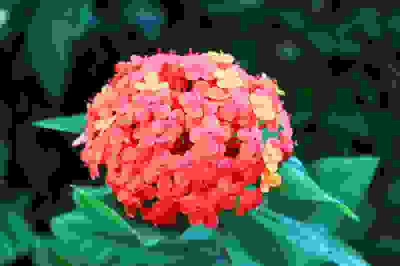 易出现皮肤过敏的花