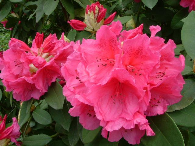 有异味的花