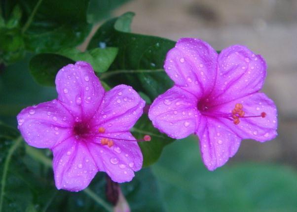 可以吸收有害气体以及尘粒的花
