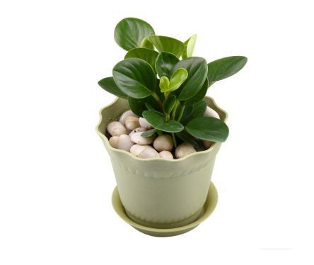 土培豆瓣绿