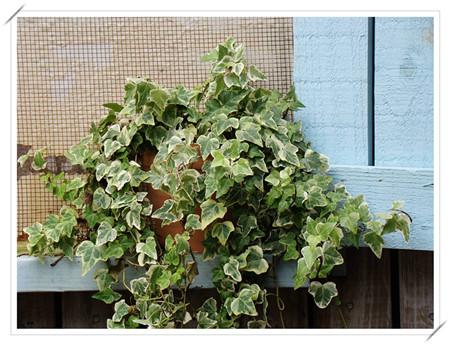 净化空气的植物有哪些