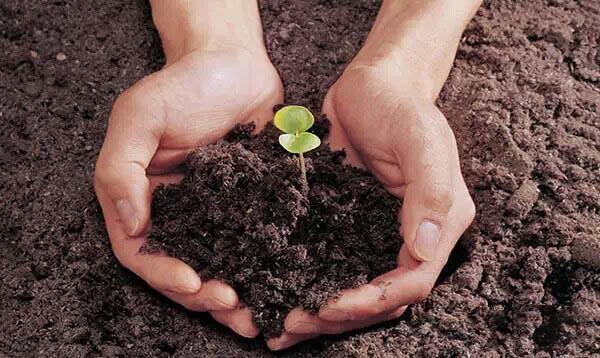 家庭自制花肥施用方法