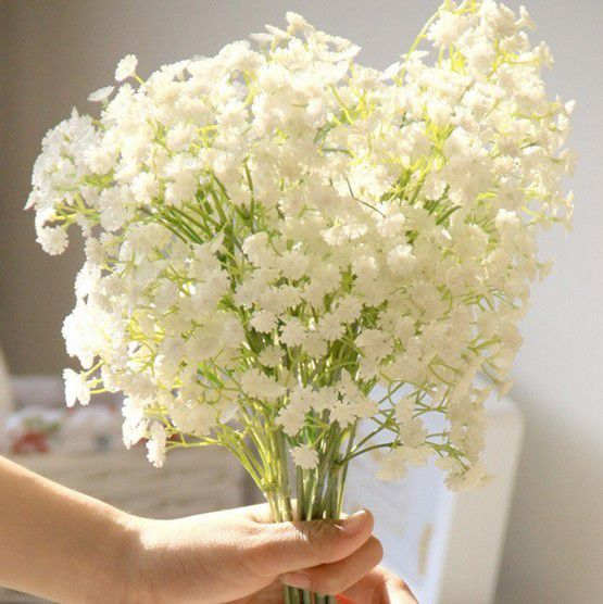满天星花的花�_毕业应该送什么花-花百科