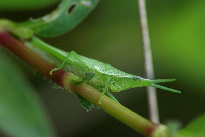 大丽花虫害防治方法