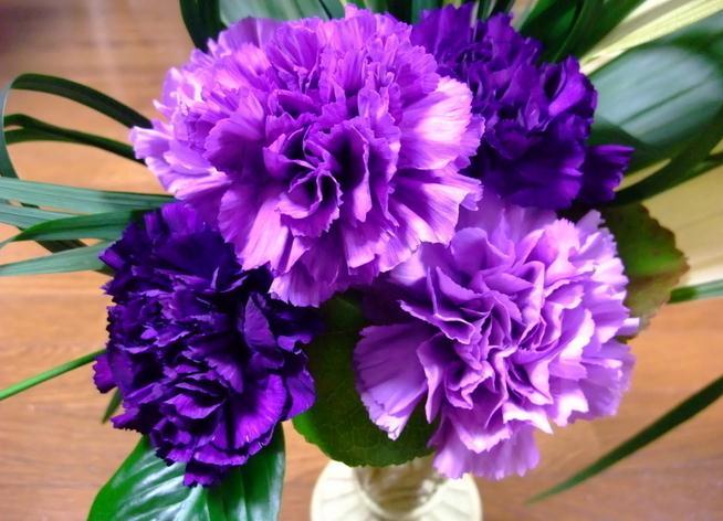 紫色康乃馨