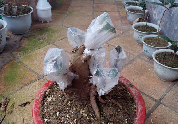套塑料袋保湿
