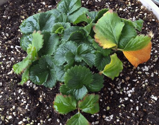 盆栽土壤的选择