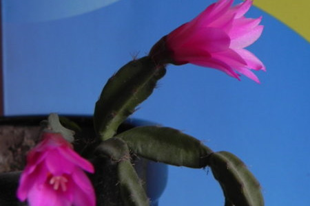 落花之舞花朵