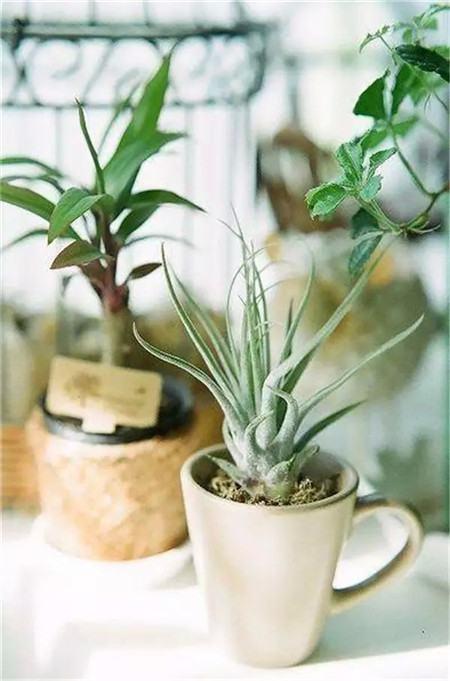 别再买花盆了,教你不花一分钱做盆栽