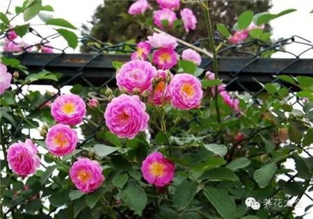 喜中性土壤花卉