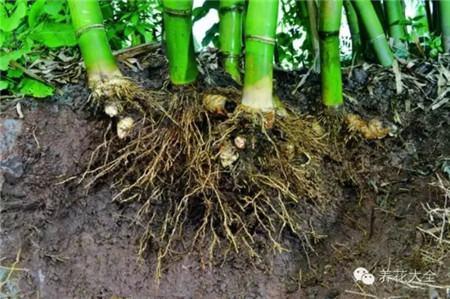 假植培养土