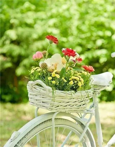 花儿在路上