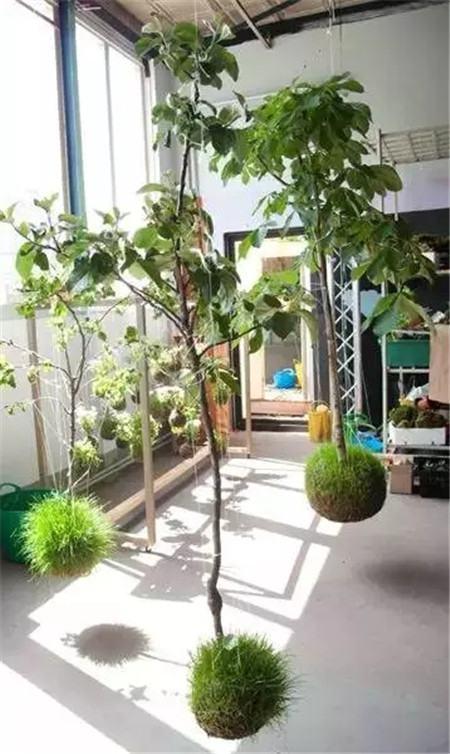 漂亮的绿植