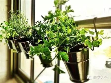 悬挂式小花园