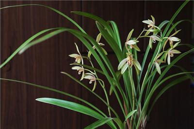 5厘米多长_中国兰指的是哪些兰花 - 花百科
