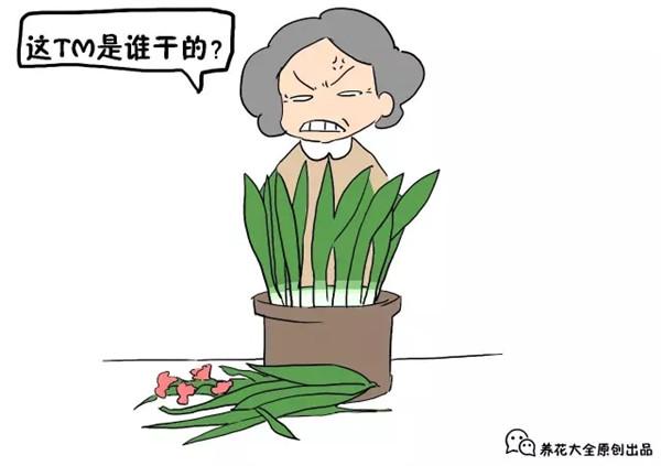花花浇水篇