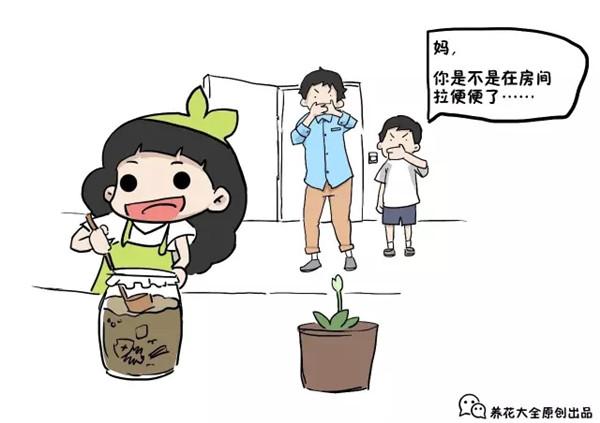 花花阳台沤制花肥