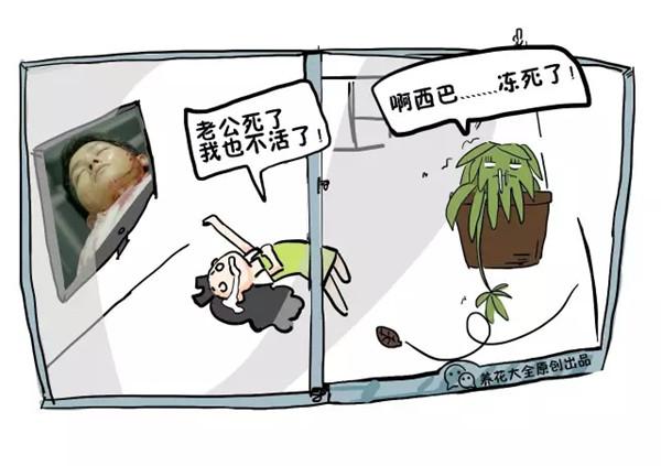 案件六:挂在窗外的吊兰