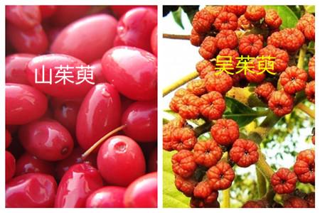 山茱萸和吴茱萸的药用价值不同