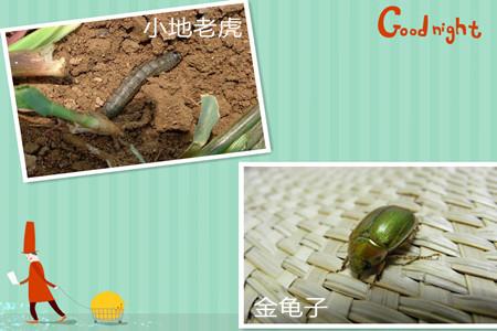 葛花的虫害及防治方法