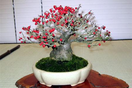 果木盆景的介绍和图片欣赏